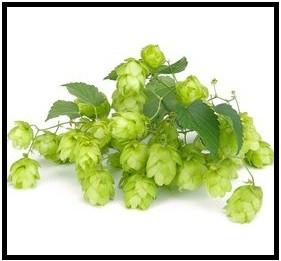 100g Smaragd Rohhopfen , Alpha 3,0 %