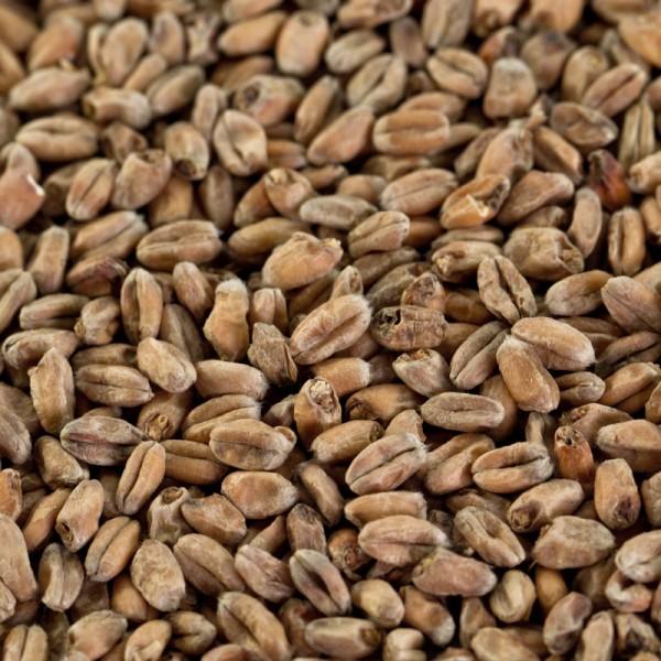 Weizenmalz dunkel für dunkle Biere EBC 14-18